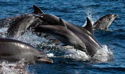 delfines establecen horarios 05
