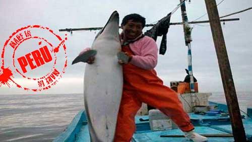 Delfin Peruano