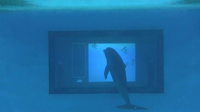 delfines y apps